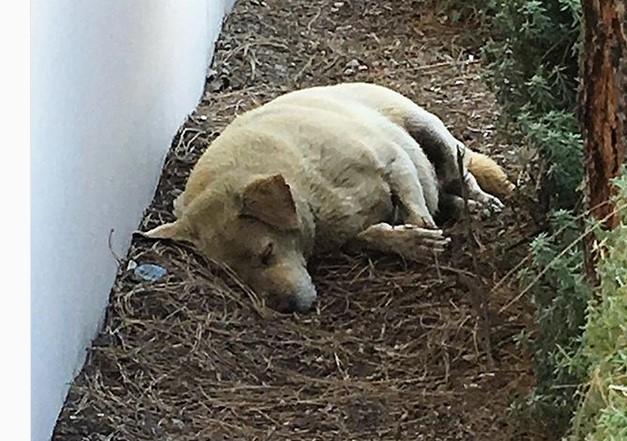 По осум години: Тие се преселија и го оставија своето куче да спие во калта на улица