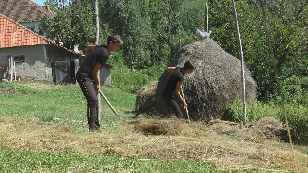 Детството на Милена (16) и Милан (14) е без татко на село: Живеат сами со бабата и обработуваат 5 хектари земја, тие се вистински херои